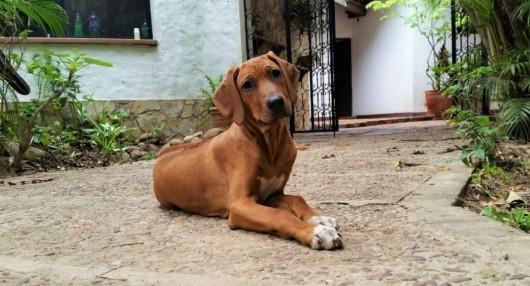 Novo's dog, Enzo